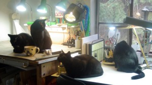 four black cats on tables