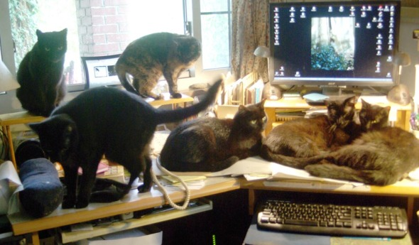 six cats on desk