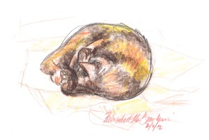 sketch of tortoiseshell cat on papers