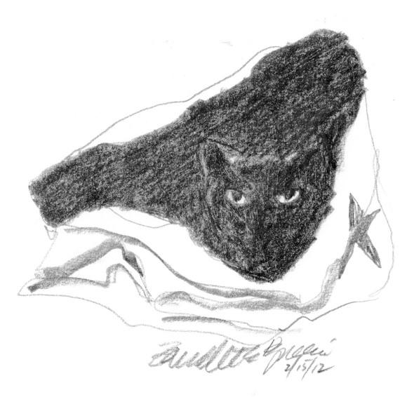 pencil sketch of cat in bag