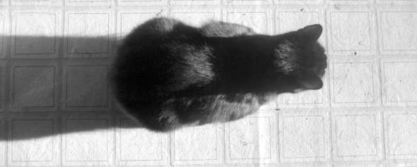 black cat in sun