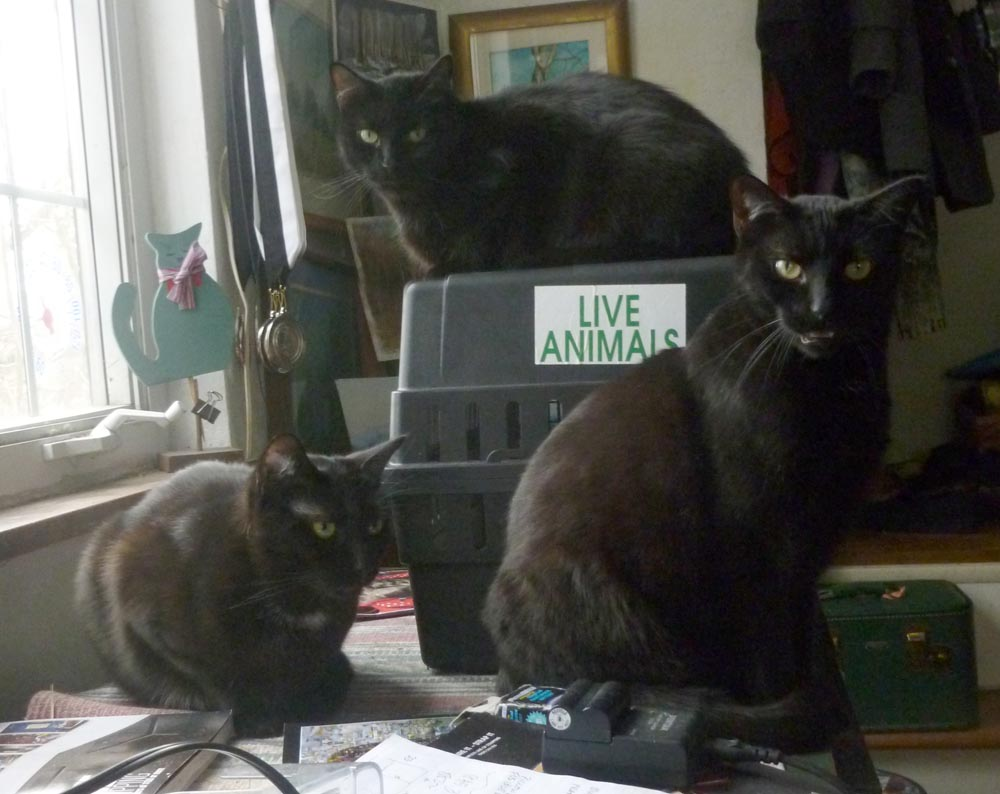 three black cats around cat carrier