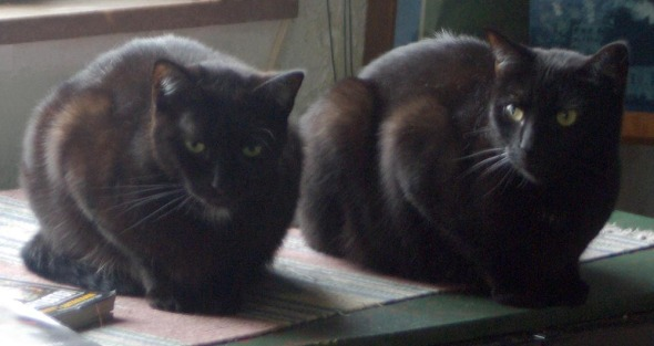 two black cats crouching on table