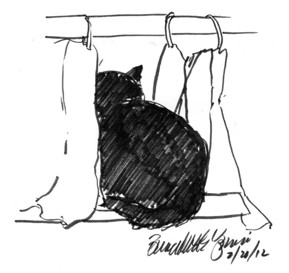ink sketch of cat looking through curtain