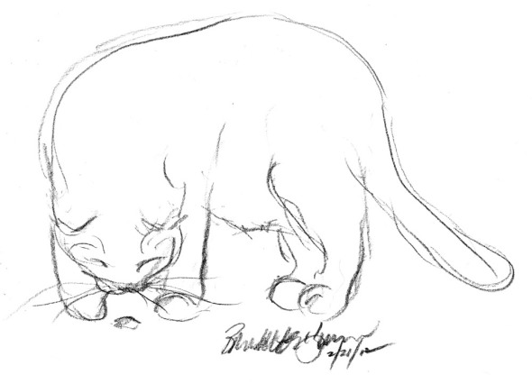 pencil sketch of cat with bug