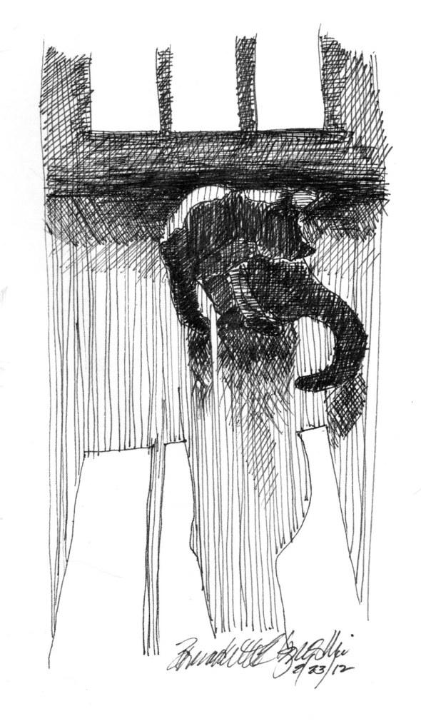 ink sketch of cat bathing in sun