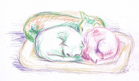 colored pencil sketch of three cats sleeping