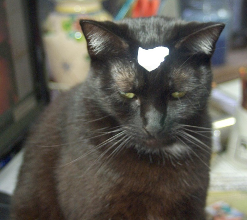 black cat with tape on forehead