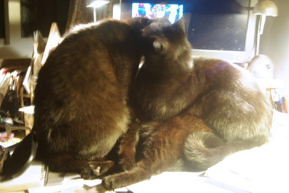 three black cats bathing in front of computer
