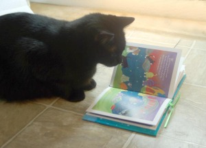 black cat reading forever paws