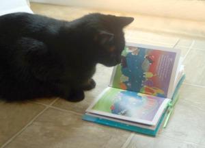 black cat reading forever paws