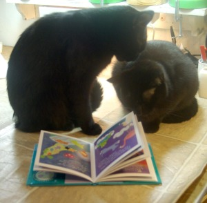 two black cats reading forever paws