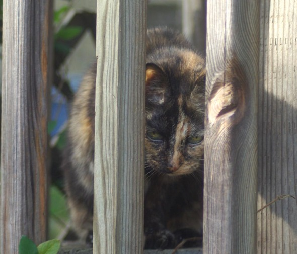 tortoiseshell cat on deck with railing