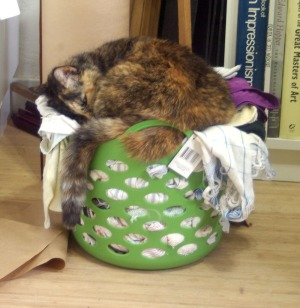 cat sleeping in rag basket
