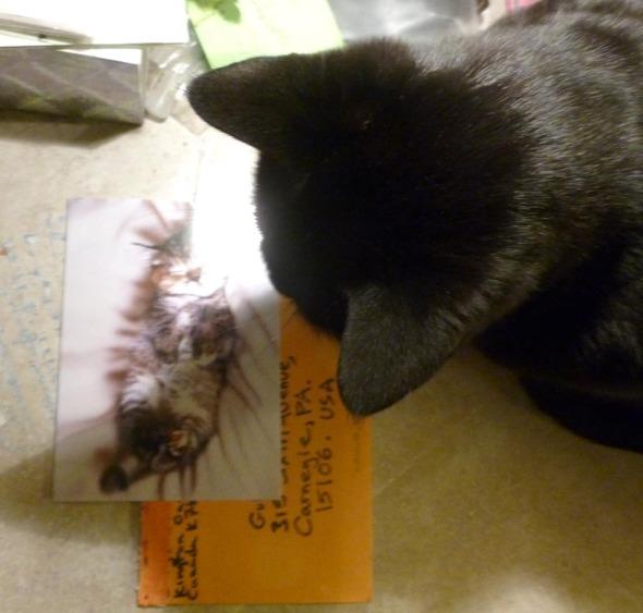 black cat looking at card