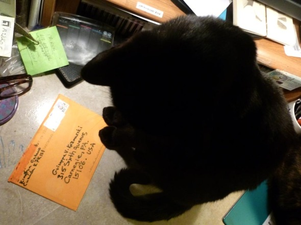 black cat sitting with paw on envelope