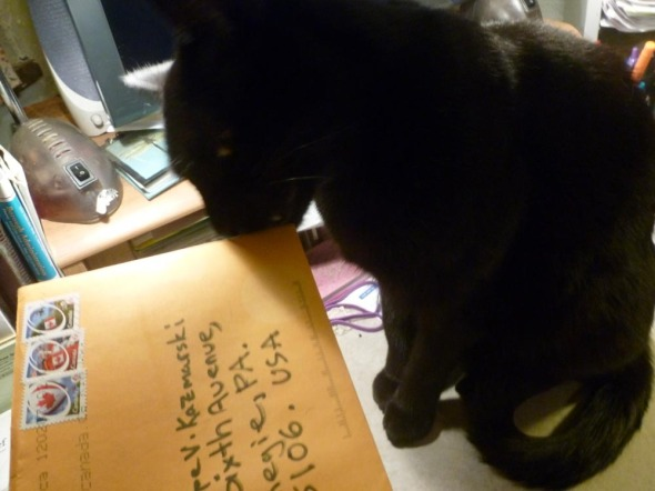 black cat rubs nose on card