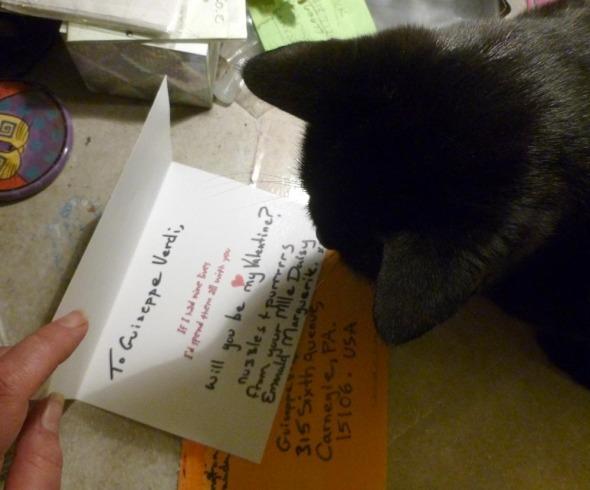 black cat reads inside of card