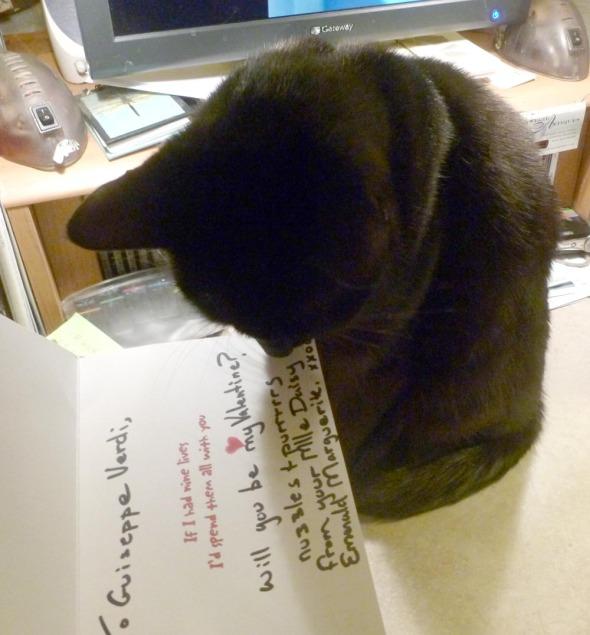 black cat sniffs card