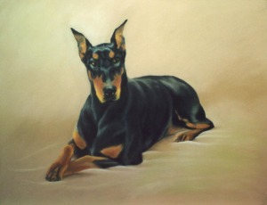 portrait of doberman
