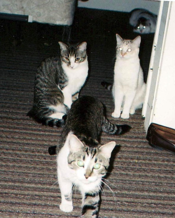 photo of four cats