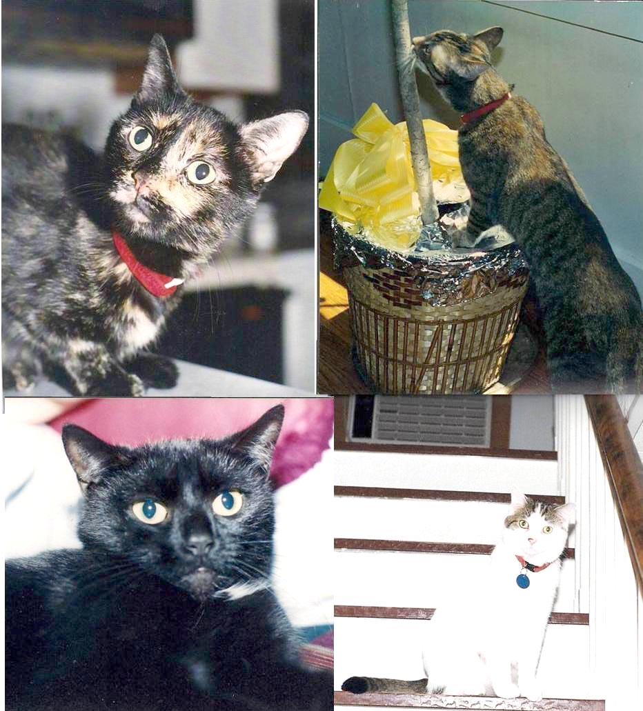 photos of four cats