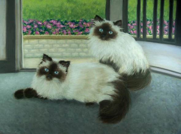 portrait of two Himalayan cats
