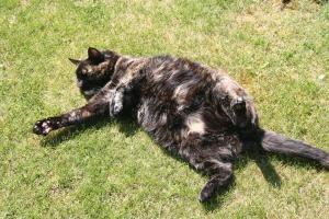 tortie cat in the grass