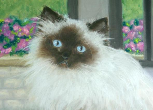 face of himalayan cat