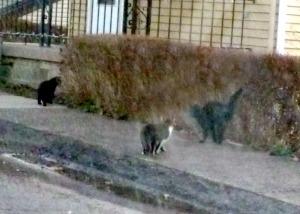 cats on sidewalk