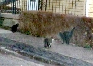 cats on sidewalk