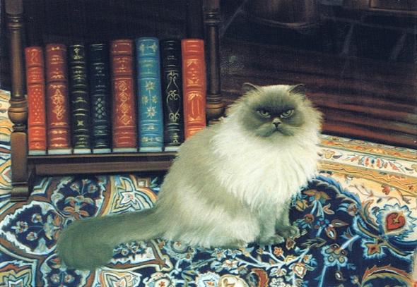portrait of Himalayan cat