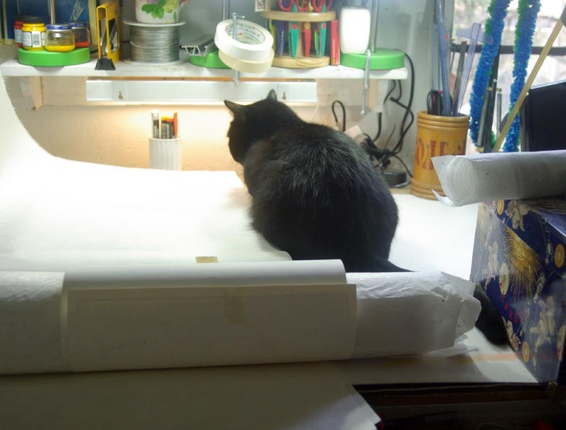 black cat among papers