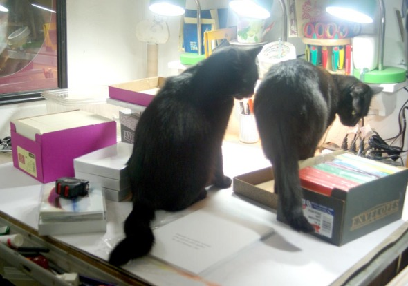two black cats with boxes