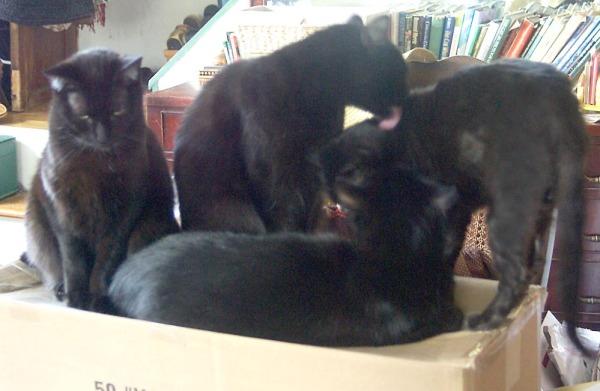 two black cats bathe third