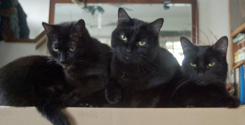 four black cats on box