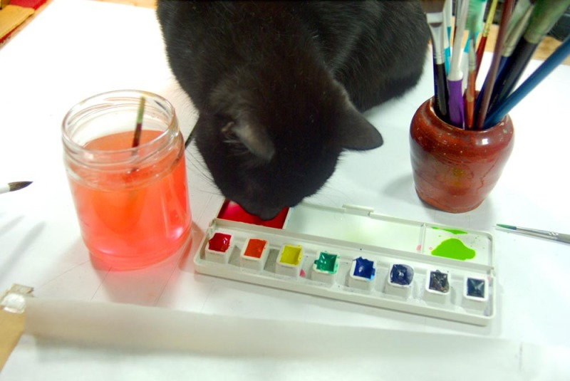 black cat licking watercolor paints