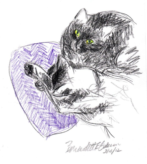two black cats on purple