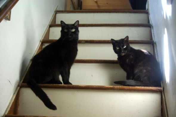 two black cats on steps