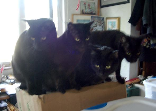 four black cats on box