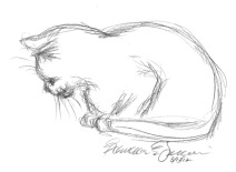 pencil sketch of cat napping