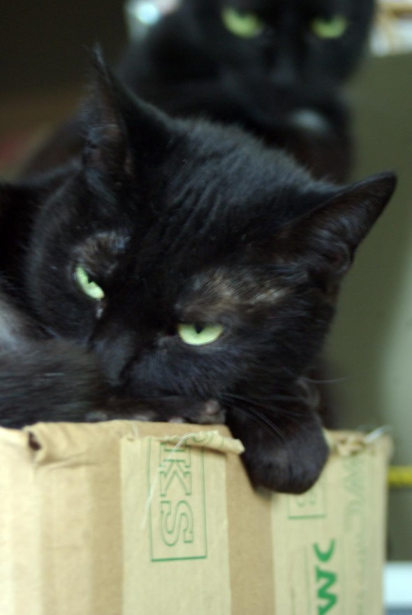 black cat on box with cat in background