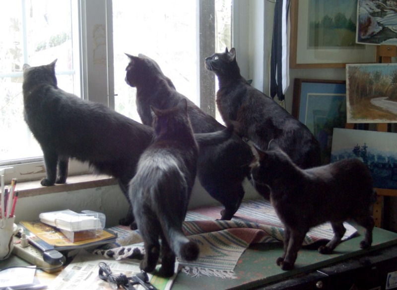 five black cats looking out window