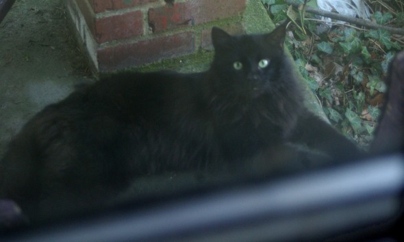 long-haired black cat on porch