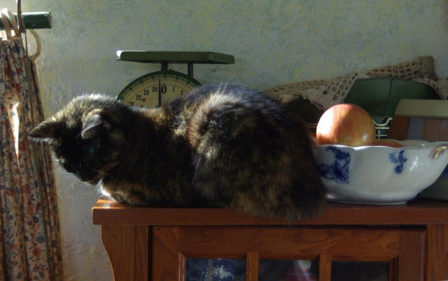 cat on bookcase with apples and scale