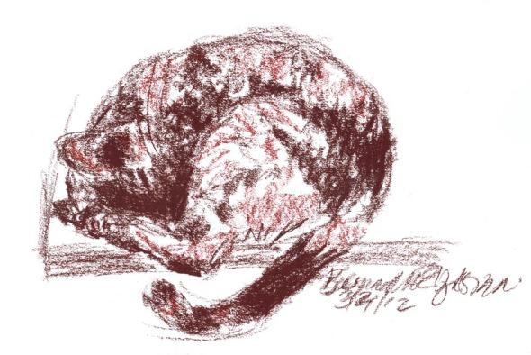 conte sketch of cat sleeping