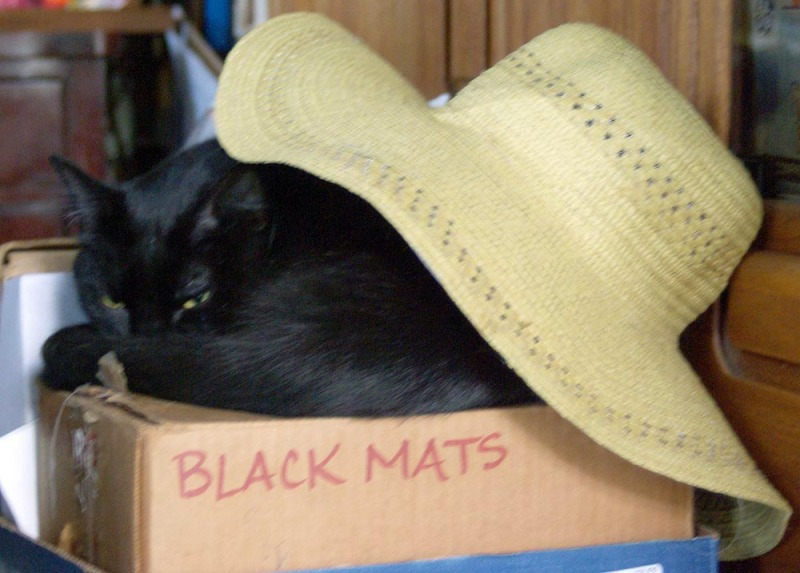 black cat on box under hat