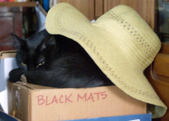 black cat on box under hat