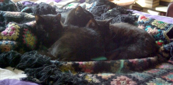 four cats on bed