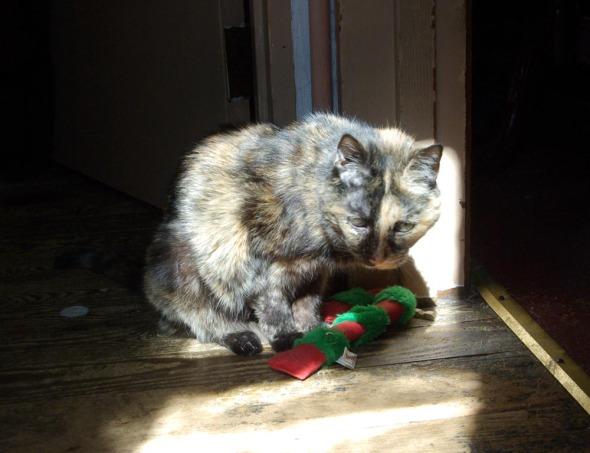 tortie cat with catnip toy